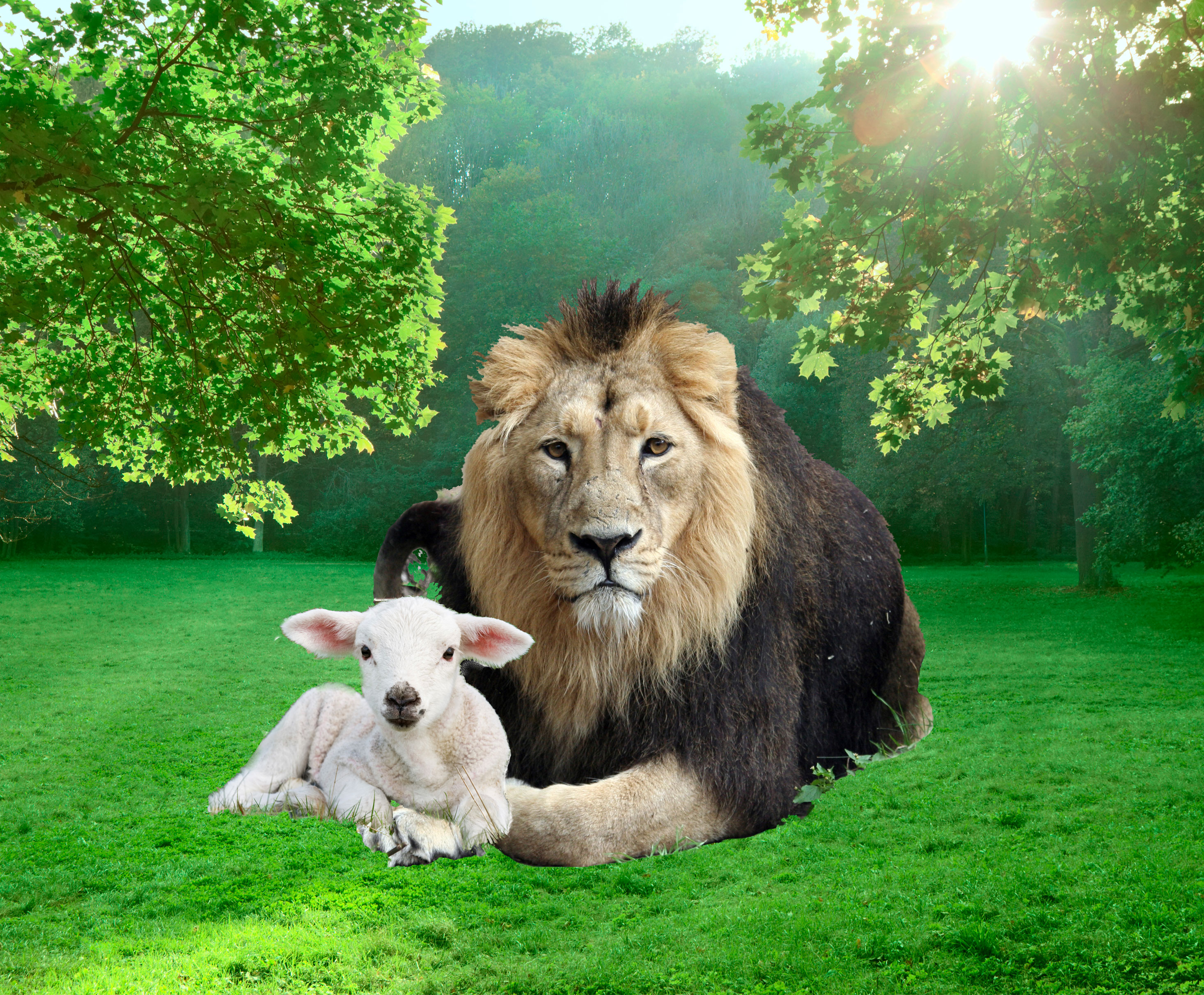 little tyke the true story of a vegetarian lion compassion circle