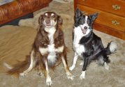 Patches (at 15 years) and Shanti