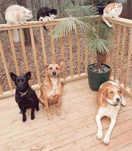 Three Vegan Dogs
