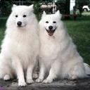 Vanya & Vladimir