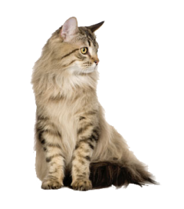 Cat Category Image Right