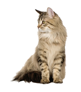 Cat Category Image