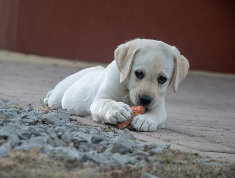 Puppy with his carrot