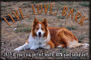 Vegan Dog Jasmine